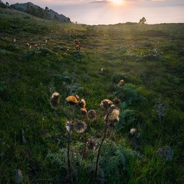 It was difficult to get this photograph. It was windy on the plateau and the light changes very fast. But then for a view minutes the wind stopped and the thistles didn´t move. This shot was taken on the canary island La Gpmera.