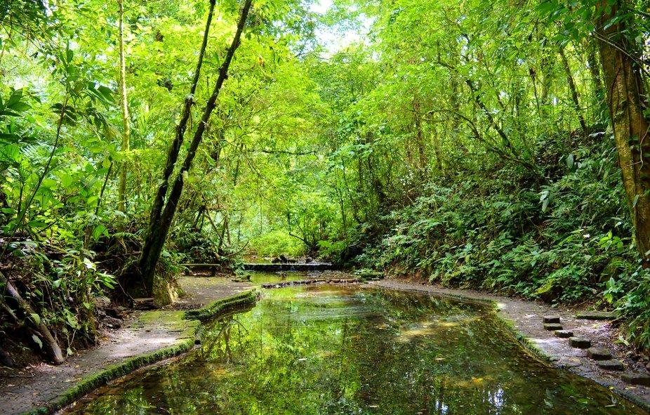 Verte réflexion, Jungle Trail, Arenal Lodge, Costa Rica