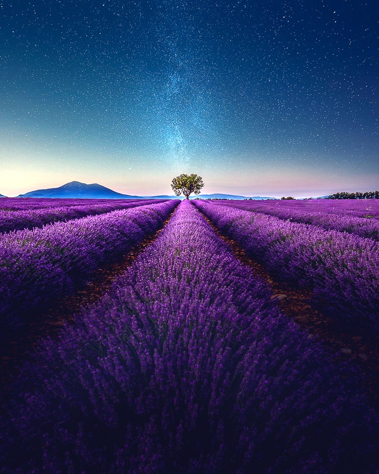 Lavender by Night - Samir BELHAMRA @Grafixart_photo by Grafixartphoto - Shades Of Purple Project