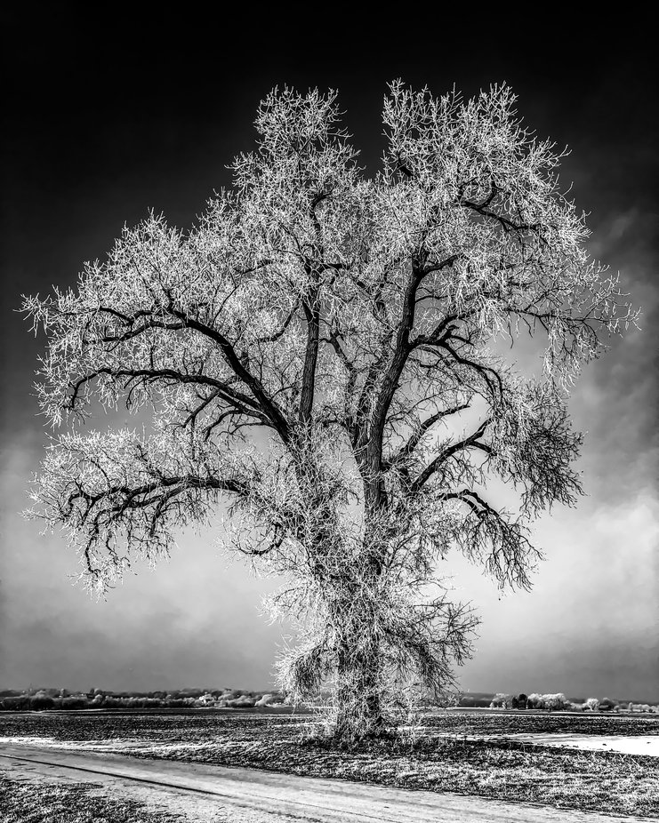 Ghost Tree by mylesnewberry - Tall Trees Photo Contest
