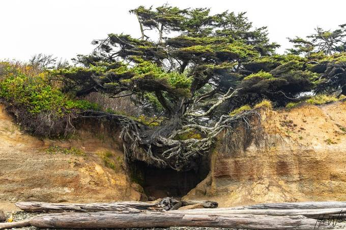 This is a tree that was on one of the beaches I visited while in Washington on my way back home from the Vancouver road trip.