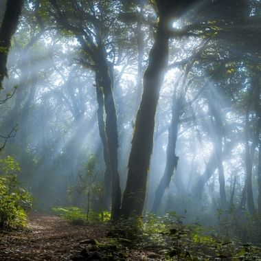I took this photograph in the cloud forest of La Gomera.