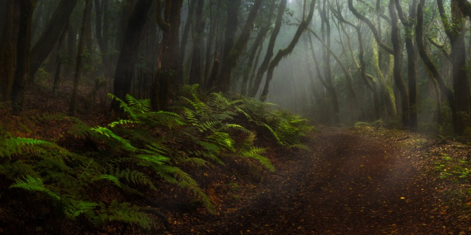 Wonderful moody light on a photo walk in the Garajonay NationalPark. (La Gomera, Canarias)