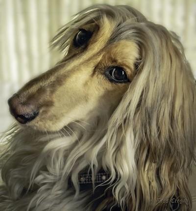 Khaleesi's Portrait