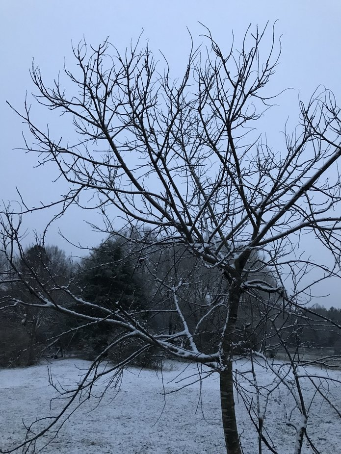 Although Barren, this tree is beautiful. The branches are highlighted by the darking sky, and the...
