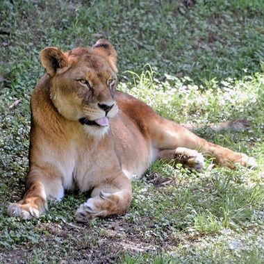 A Day At Mogo Zoo (3)