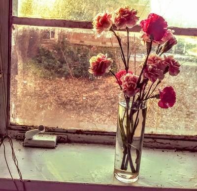 Beauty from my kitchen window...