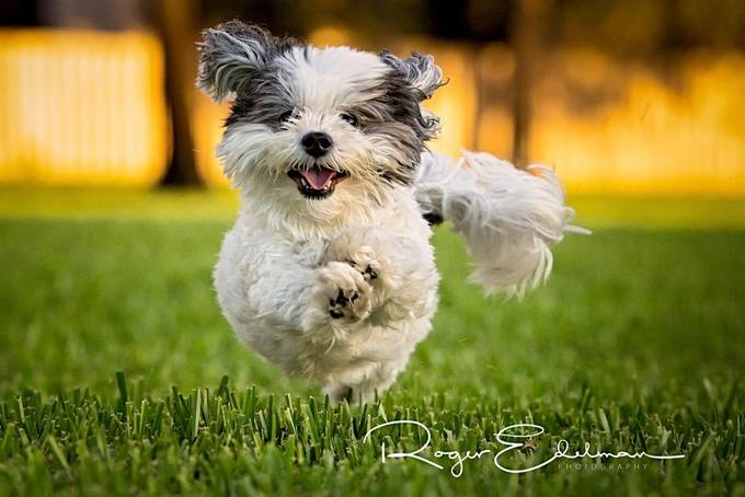 Play time! by rogeredelmanphoto - Dogs In Action Photo Contest