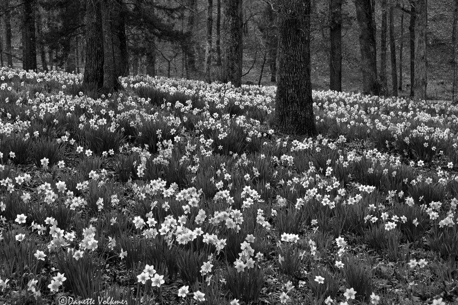 Flowered Forest Floor