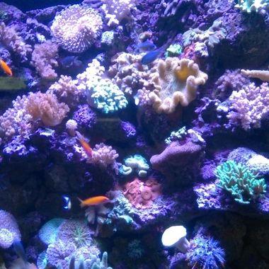 coral scenic view