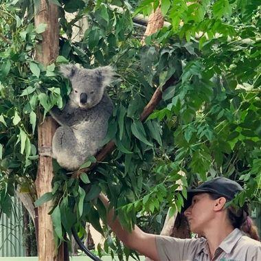 Koala love!