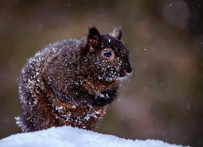 Begging for food by MeOost - We Love The Winter Photo Contest