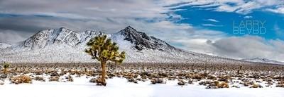 Rare Snow Covered Desert