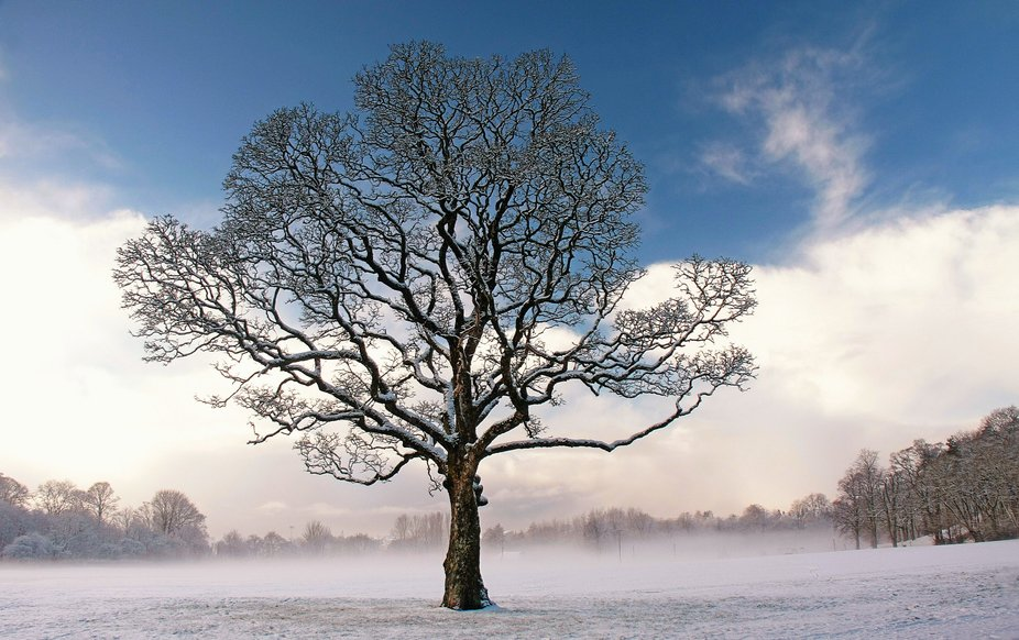 Took this during a cold morning walk in our local park in Kilmarnock Scotland.