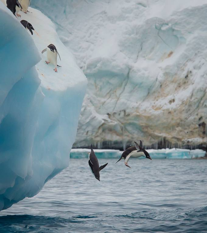 Penguins on ice. by jayneryan