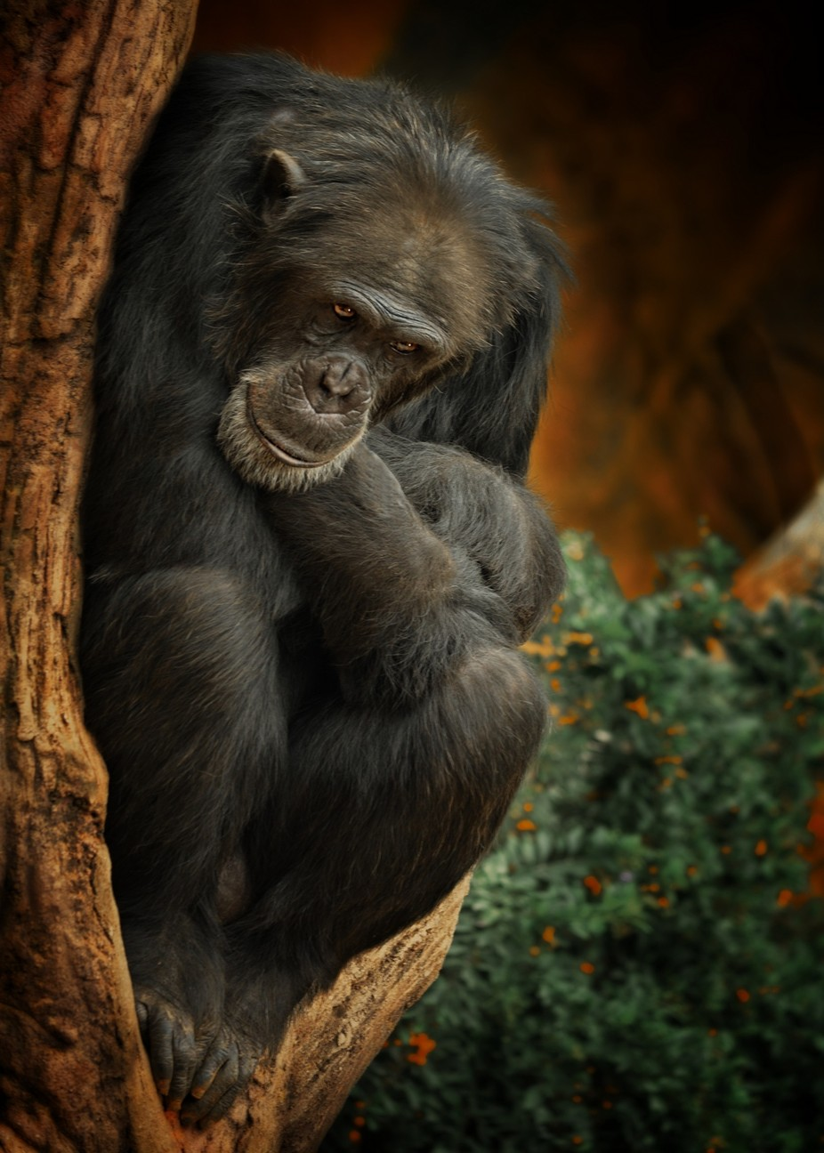 Pensive Primate by Hood - Celebrating Earth Day Photo Contest 2019
