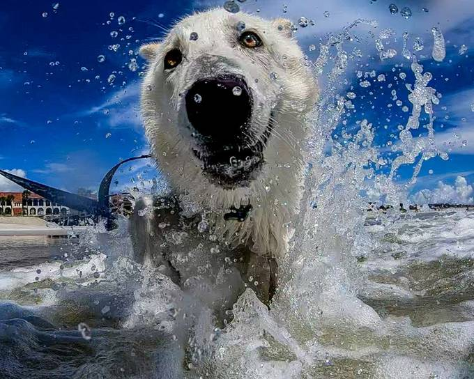 Shiva's Ocean Joy by cchimera - Dogs In Action Photo Contest