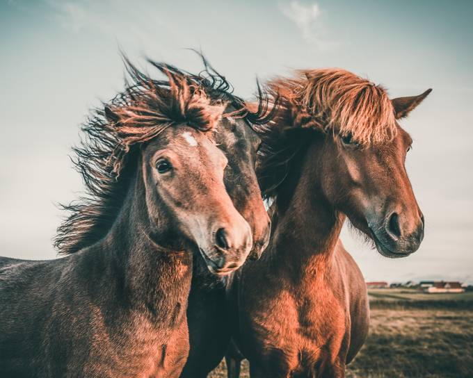 Great hairstyle  by maperick - Wind In Nature Photo Contest