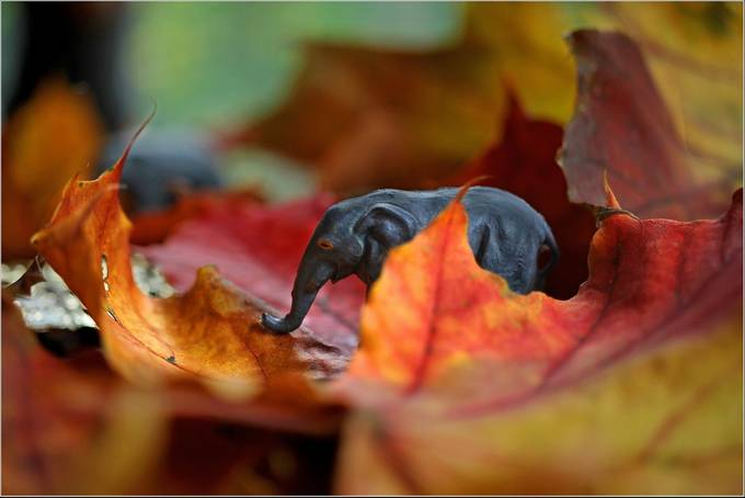 Elephant, Miniature, Macro by johngriffiths - Image Of The Month Photo Contest Vol 42