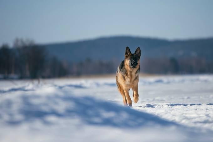 DSC_6083 by markopaakkanen - Dogs In Action Photo Contest
