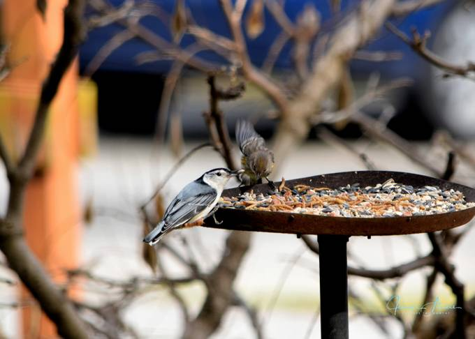 Feeding on Mealworms