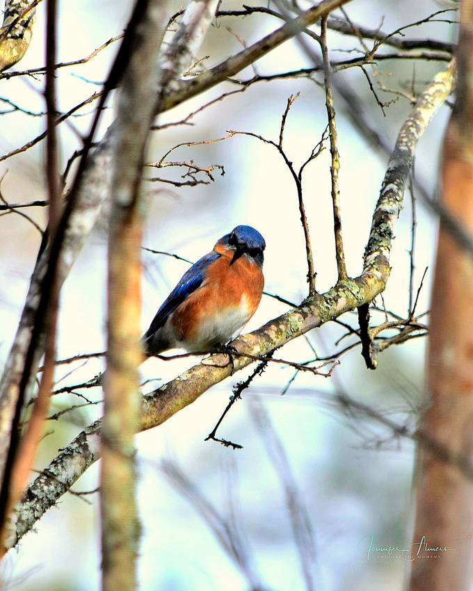 Bluebird Looking at Me