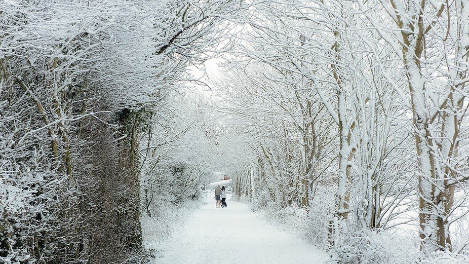 Country lane  close to home and trees fully laden with the overnight snow