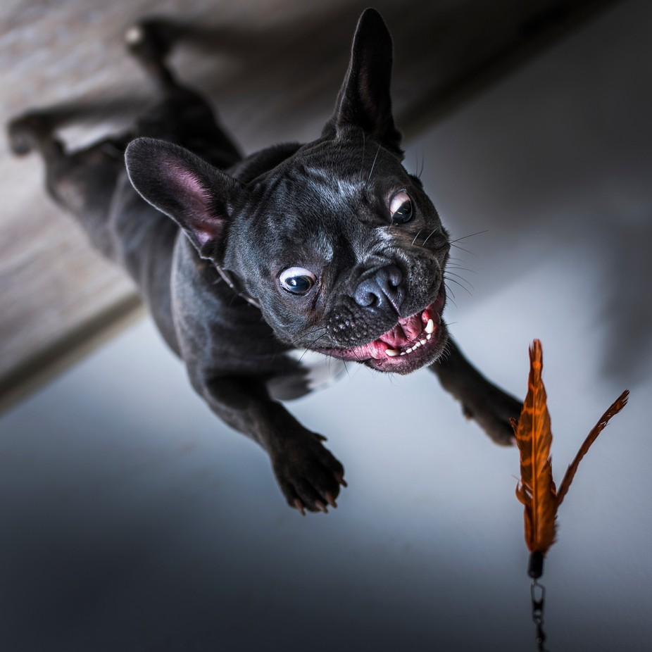 Beast by tadejturk - Dogs In Action Photo Contest
