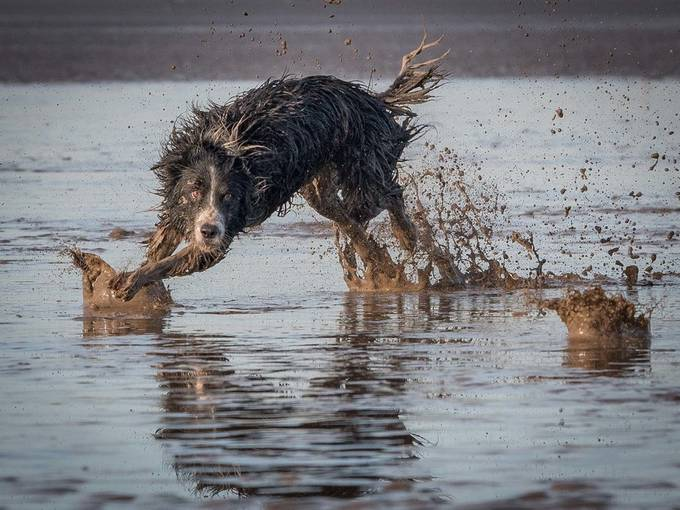 Why by chriswillis - Dogs In Action Photo Contest
