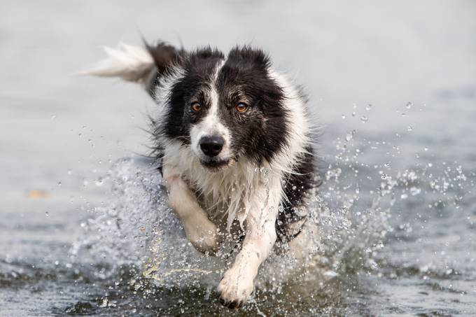 Water fun by Pr1moFotografie - Dogs In Action Photo Contest