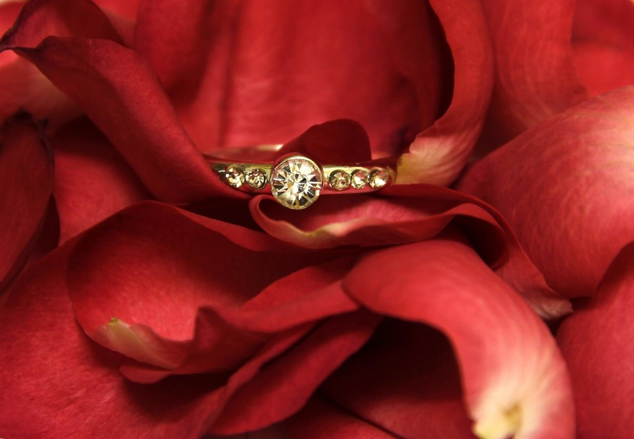 Diamond and gold ring, gently cradled in Red Rose petals