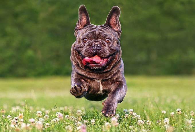 Bentley by Alexander_Sviridov - Dogs In Action Photo Contest