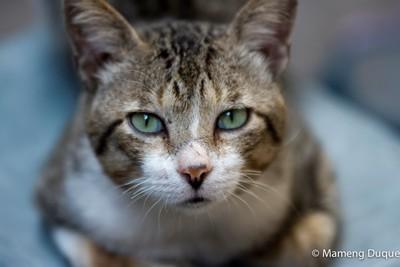 Street Cat Named Badong