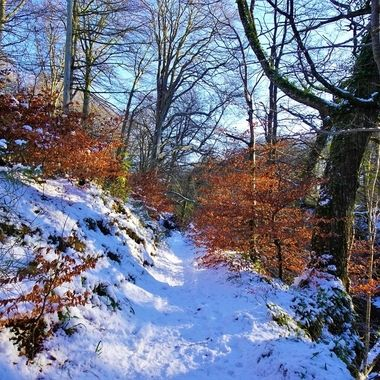 After the snow ,exploring the winter Wood Scenic & enjoying a cold  snowy scenic walk