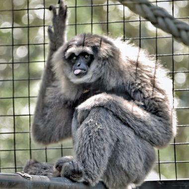 A Day at Mogo Zoo (5) - Cheeky Monkey