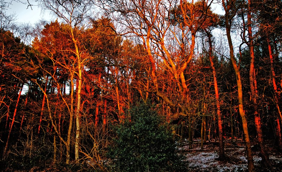 The sun was setting and the sunset wasn't very colourful, I turned round to see the tree...