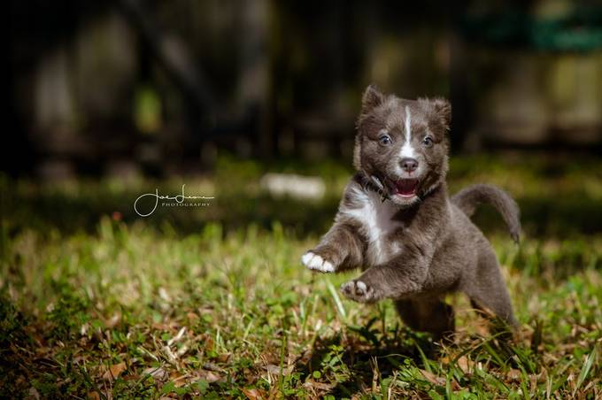 by JoeLeonePhoto - Dogs In Action Photo Contest