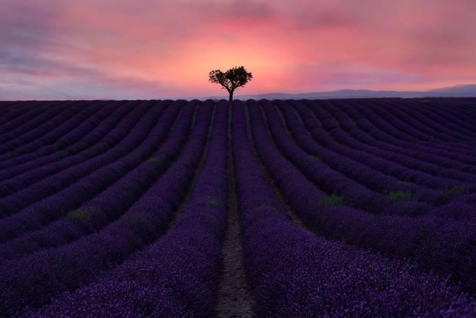 Lavender Sunset by manuelhutama - Shades Of Purple Project