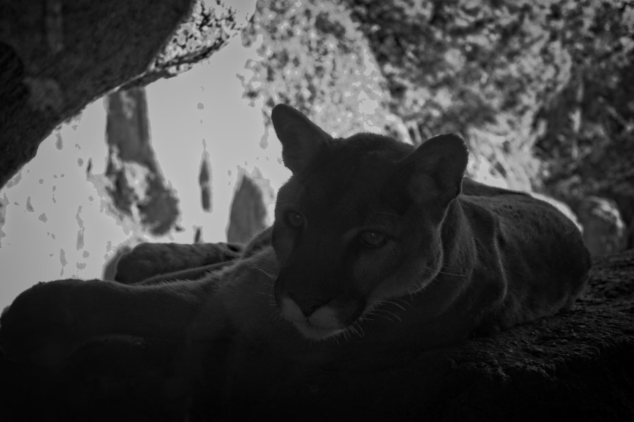 Mountain lions have a magical essence about them. They might strike fear into some people&#03...