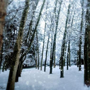 Lithia Feels Like Narnia