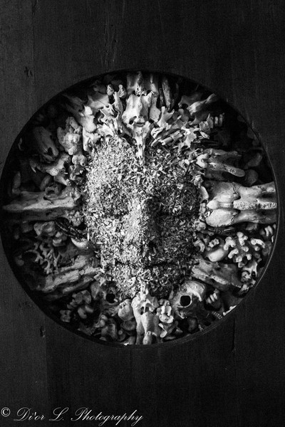 Bones, Teeth and Skulls