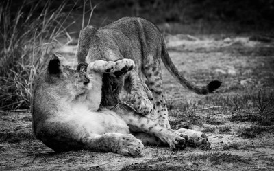 Time to play  - © Brian Basson Photography