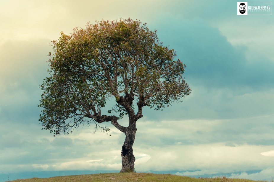 An Alone Tree On A Mountain Uphill