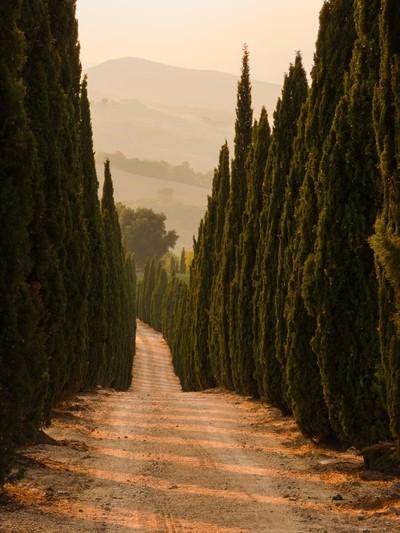 Tuscan_Sentinels
