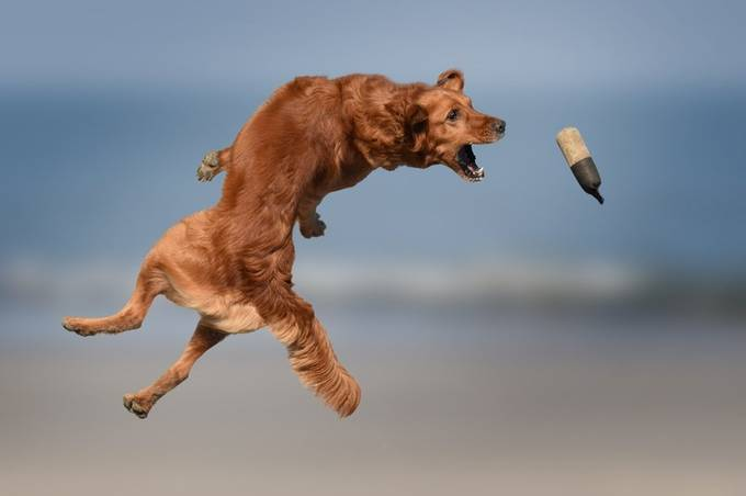 Jump by Creative_art - Dogs In Action Photo Contest