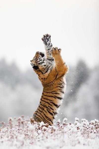 Just stretch...