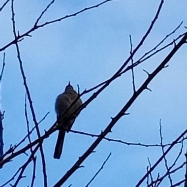 Step outside this morning  and this bird just sat there enjoying the weather.