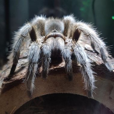 Spiders Up Close