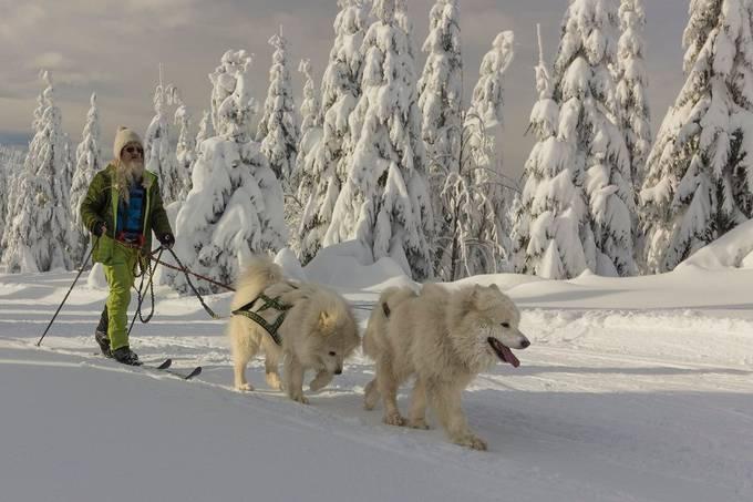 Friends by petan - We Love The Winter Photo Contest