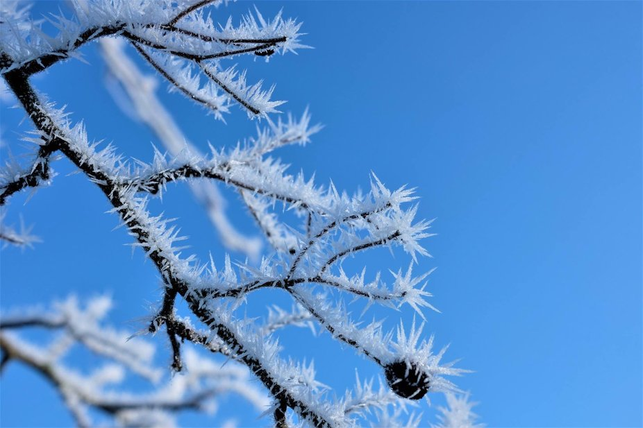 Ice crystals form on the trees